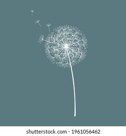 Dandelion abstract vector. Template for background, poster, wallpaper. Vector illustration.