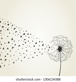 From a dandelion birds take off. A vector illustration