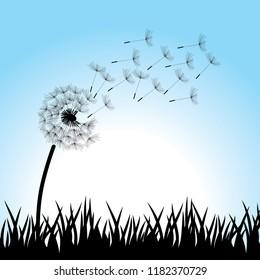 dandelion flower, background illustration