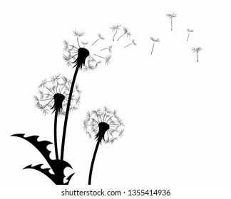 The dandelion Flower with flying seeds.