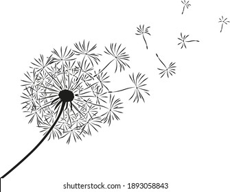 Dandelion flower with flying seeds. Card with abstract flowers, dandelions. The wind blows the seeds of a dandelion. Template for posters, wallpapers, posters.