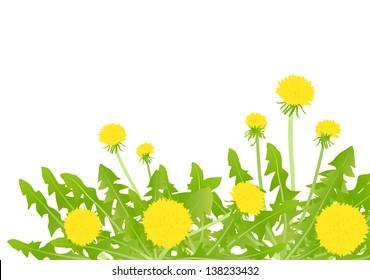 Dandelion flower vector background card
