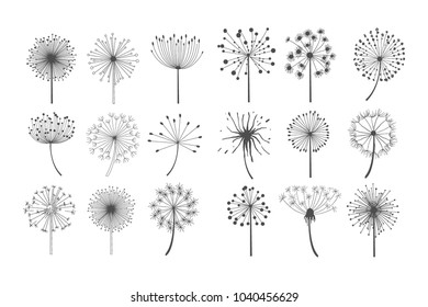 Dandelion flowers with fluffy seeds set, floral silhouettes design elements vector illustration