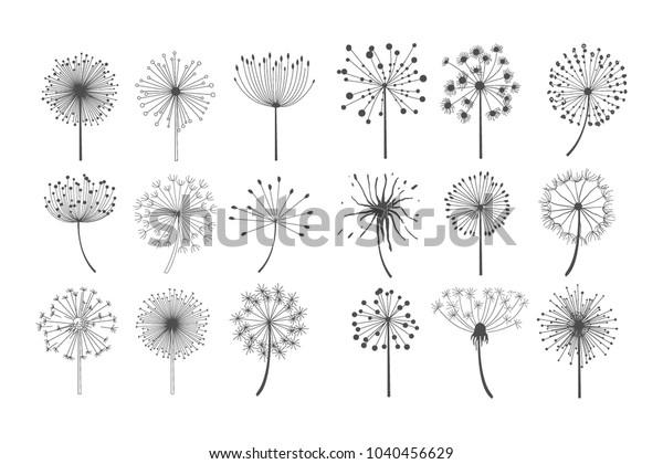 Цветы одуванчика с пушистыми семенами набор, цветочные силуэты дизайн элементов векторная иллюстрация