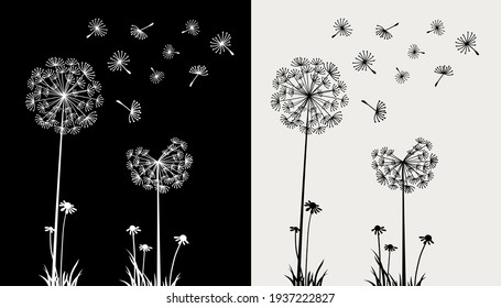 Dandelion flying in the wind on black and cream background
