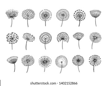 Dandelion set. Doodle hand drawn dandelions monstera delicate plant seeds summer botanical fluff flower isolated vector silhouettes