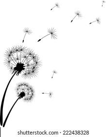 Dandelion silhouette