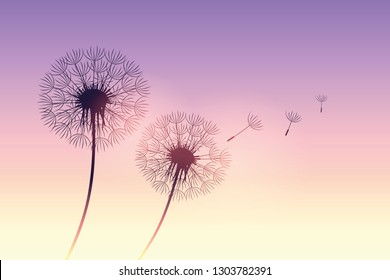 dandelion silhouette at purple sunset with flying seeds vector illustration EPS10