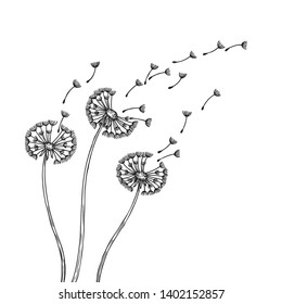 Dandelion silhouettes. Dandelions grass pollen delicate plant seeds blowing wind fluff flower abstract vector spring graphics