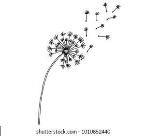dandelion time on white background. The wind inflates a dandelion. dandelion Icon. hand drawn. Vector Illustration.