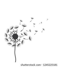 Dandelion vector illustration design