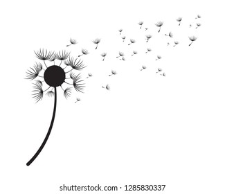 Dandelion vector illustration design