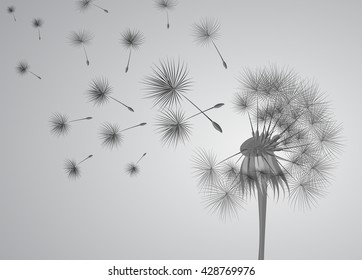 dandelion vector on grey background. Flying spores. Concept of wishing, tenderness and summer time.