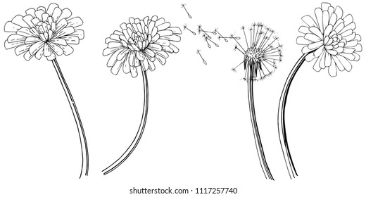 Dandelion in a vector style isolated. Full name of the plant: dandelion. Vector flower for background, texture, wrapper pattern, frame or border.