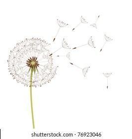 Download 9600 Background Hitam Dandelion HD Terbaik