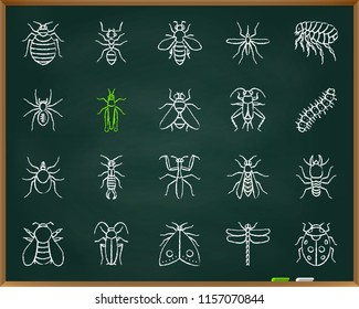 Danger Insect chalk icons set. Outline sign kit of bugs. Beetle linear icon collection includes dragonfly, fly, spider bed bug. Hand drawn simple danger insect symbol on blackboard vector Illustration