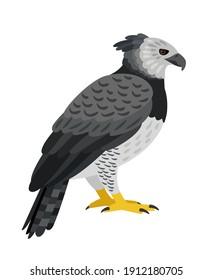 Dangerous bird. Cartoon beautiful flying hunting animal of sky, grey exotic character of ornithology, vector illustration of harpy eagle isolated on white background