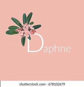 daphne vector illustration. pink peach flower.