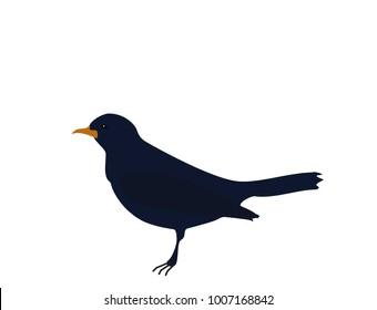 Dark blue bird Songbird (common blackbird) with orange beak isolated on white background, flat design, vector, eps 10