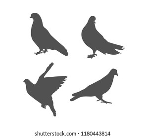 Dark grey silhouettes of pigeon in different poses isolated on white background. Bird, symbol of peace. Vector realistic illustrations