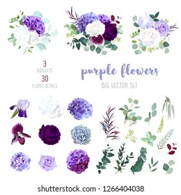 Dark purple garden rose, plum orchid, white and violet rose, lilac hydrangea, iris, carnation, seeded eucalyptus, greenery, succulents big vector collection. All elements are isolated and editable.