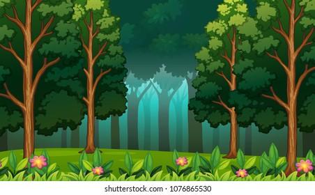 Dark Rainforest with Big Trees Landscape illustration