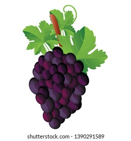 Dark red grapes EPS Vector clip art in white background.