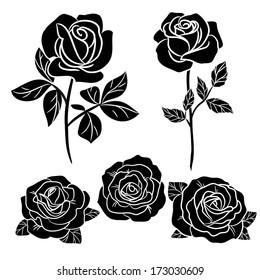 dark  roses on white