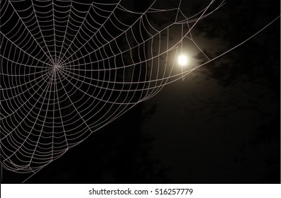 Dark wood, a large spider web and the full moon in the night sky
