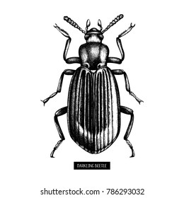 Darkling beetle hand drawn sketch. Vintage illustrations of black bug on white background. Vector insects collection