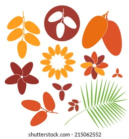Date fruit. Icon set. Isolated fruit on white background. Vector illustration