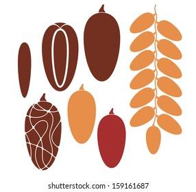 Date. Fruit. Vector illustration