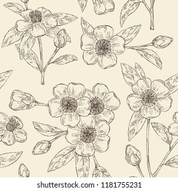 Deamless pattern with camellia sasanqua: leaves, camellia sasanqua flowers and bud. Cosmetic, perfumery and medical plant. Vector hand drawn illustration