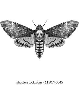 Death's Head Hawkmoth (Acherontia Styx)