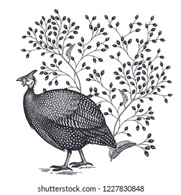 Decoration with bird and flowers. Realistic hand drawing poultry quail and tree branches isolated on white background. Vector illustration art. Black and white sketch. Vintage engraving.