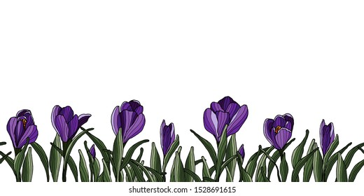Decoration border with colorful crocus flowers. Springtime violet flower.
