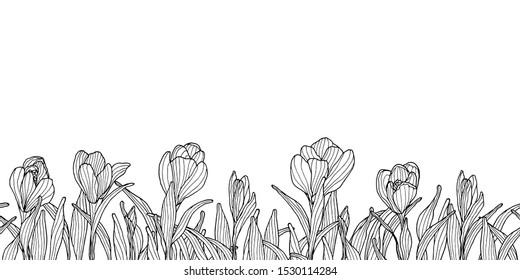 Decoration border with ink sketchy crocus flowers.  Springtime violet flower silhouette.