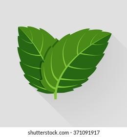 Decorative background with green and fresh mint leaves. Vector illustration