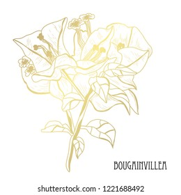 Decorative bougainvillea  flowers, design elements. Can be used for cards, invitations, banners, posters, print design. Golden flowers