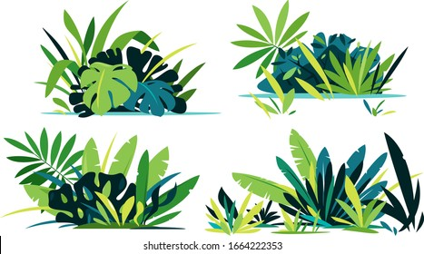 Decorative compositions of different jungle plants on ground, group of green plants isolated, dense vegetation of the jungle