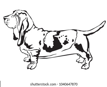 Decorative contour portrait of standing in profile  Basset Hound, vector isolated illustration in black color on white background