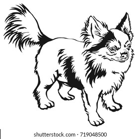 Decorative contour portrait of standing in profile long-haired Chihuahua dog, vector isolated illustration in black color on white background