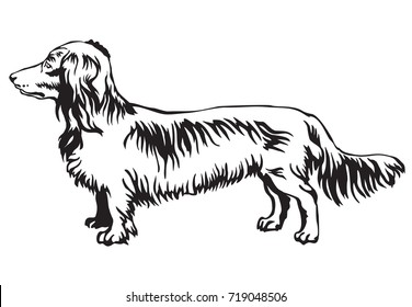 Decorative contour portrait of standing in profile Long-haired Dachshund dog, vector isolated illustration in black color on white background