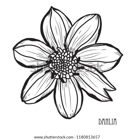 Decorative Dahlia Flowers Design Elements Can Stock Vector Royalty