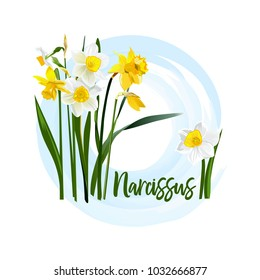Decorative flower narcissus for bride bouquets, wedding cards, banners, and posters, Also suitable for textile prints. Daffodil flower