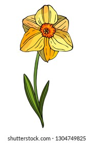 Decorative flower Narcissus. Vector floral template for decorating greeting cards, coloring books, art therapy, anti stress, print for t-shirt and textile.