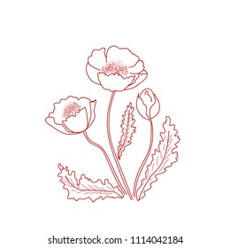 Decorative flowers. Red poppy. Set hand drawn flowers, poppy with stem and leaves. Vector illustration. isolated floral design elements. Greeting card template, blank floral wall decor. Background.