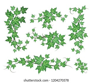 Decorative frame leaves of green ivy. Vector elements isolated on white background. Postcard, place for text.