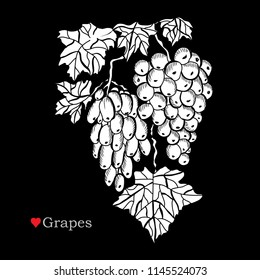 Decorative  grapes, design elements. Can be used for cards, invitations, banners, posters, print design. Fruitl background in line art style