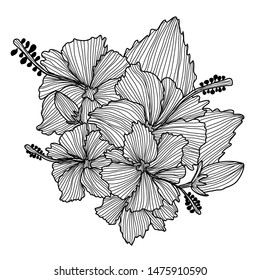 Decorative hibiscus flowers, design elements. Can be used for cards, invitations, banners, posters, print design. Floral background in line art style